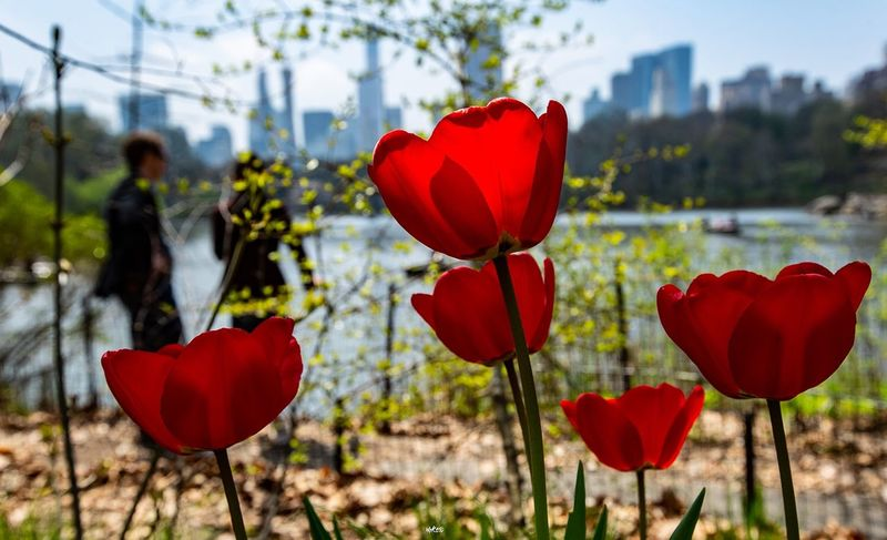 Nature between Skyscrapers City Architecture Landscape Photooftheday EyeEm Best Shots Beauty In Nature Photography Bestoftheday New York Red Plant Flower Focus On Foreground Flowering Plant Nature Beauty In Nature Close-up Love