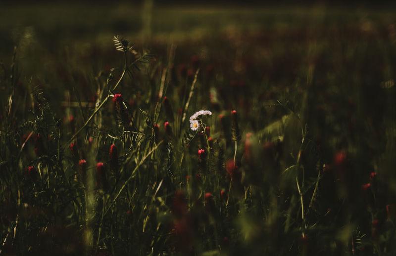 Close-up of ladybug on field