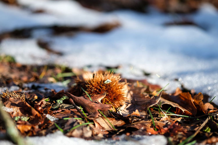 Dry Leaves Amidst Snowcapped Field During Winter