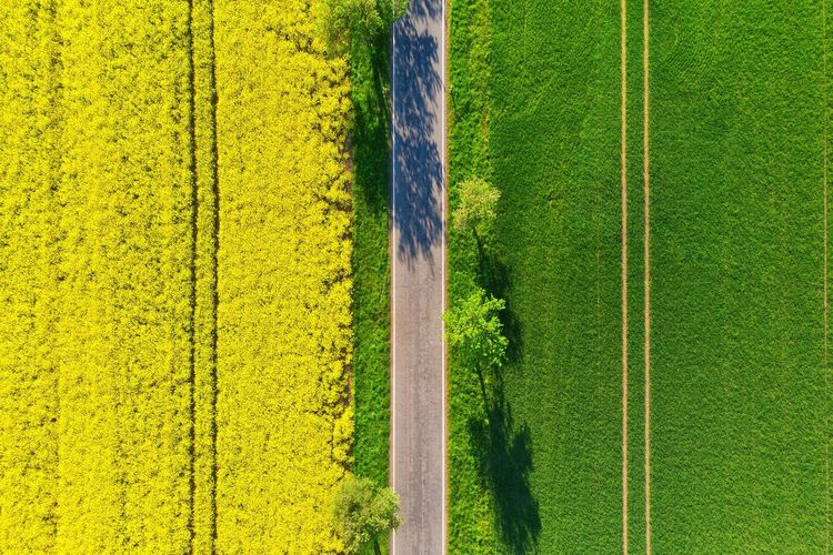 High angle view of road amidst fields