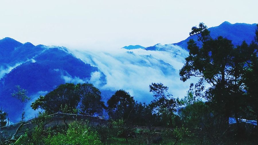 嵐 Early Morning Shan Lan Cloud Cloud Waterfall EyeEm Taiwan Mountain Tree