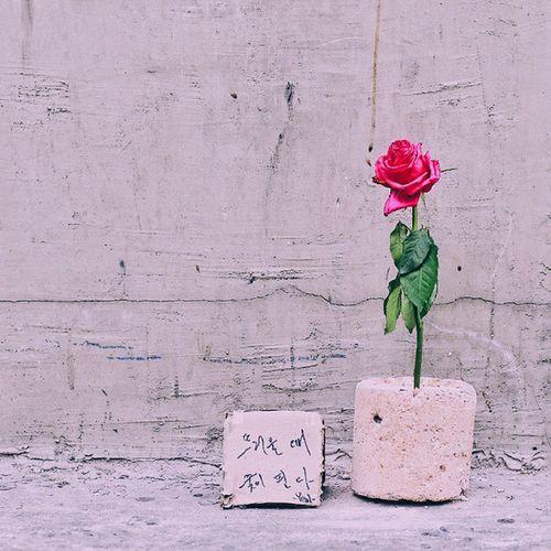 """Fervor blooms flowers""- Random rose on a korean bbq coal by the sidewalk.🌹📷 Quotesfromflowers Sodeep Street Vscocam seoul korea"