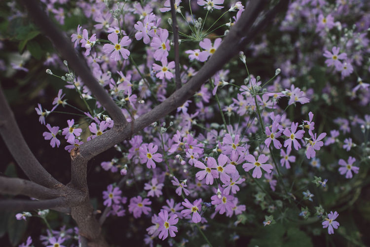 Flowering Plant Flower Plant Growth Fragility Vulnerability  Freshness Beauty In Nature Close-up Day Nature No People Tree Pink Color Springtime Petal Branch Outdoors Botany Focus On Foreground Flower Head Purple