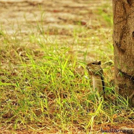 The little stewart 😘 😍 Fromthenature Naturebeauty Clickclick Agra Itsphotosensation😎
