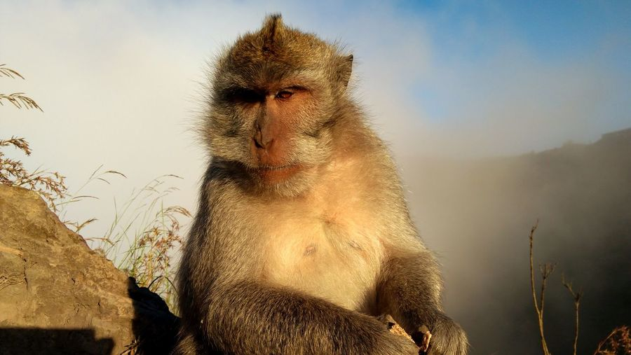 take a pict for ID Card. LOL Outside Outdoors Photograpghy  Bali Mountain INDONESIA Nature Panoramic Monkey Animal Sitting Summit Summit View Outdoors Outdoor Photography Photography Landscape Travel Photography Baboon Sky Safari Animals Animal Trunk