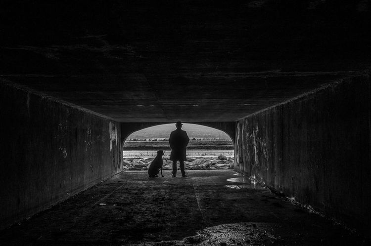 Watching over the city EyeEm And Getty Jeff Sinnock The Detective  Detective Dog Black And White Tunnel Protect Dramatic