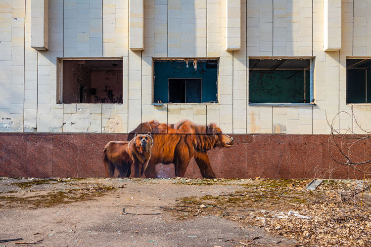Horse standing in a building