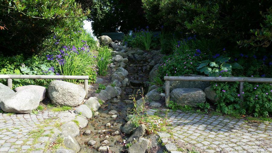 The Traveler - 2015 EyeEm Awards The Great Outdoors - 2015 EyeEm Awards Park Summer Green Trees Nature Landscape