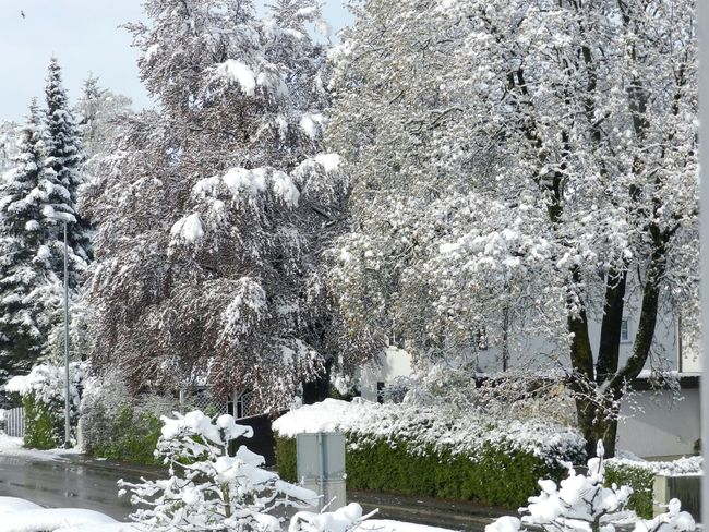 26.04.2016 Beauty In Nature Day Nature No People Outdoors White Color Winter Is Back