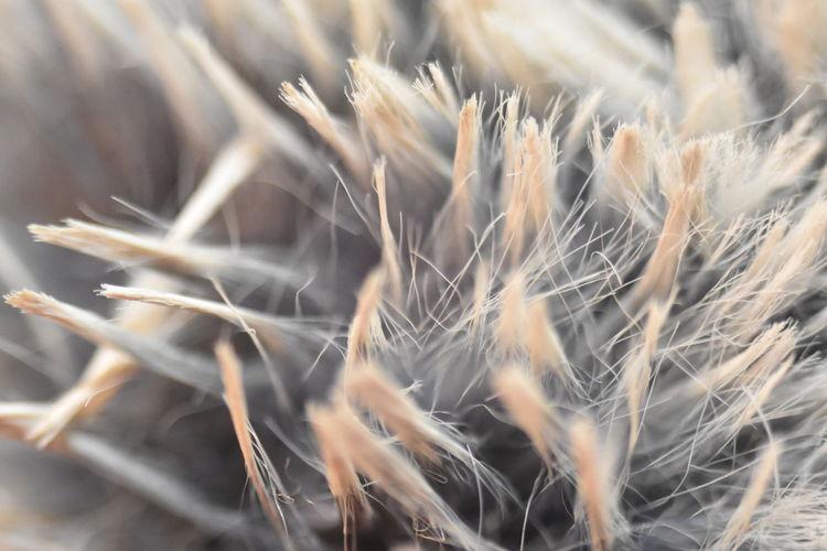 Close-up of fur
