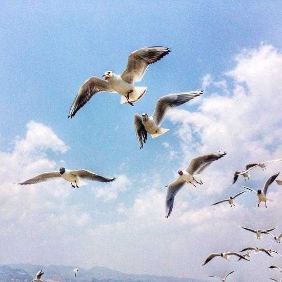 Dianchi side groups of seagulls. Beautiful Day Quality Time Enjoying Life Photo By IPhone Hello World Traveling