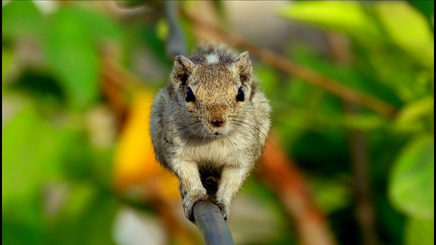 Squarel Check This Out Creative Taking Photos Nature_collection Inocent♥ Relaxing Ballance Animals Animal Photography Animal Themes Animal_collection Animal Portrait Animal Lover Animalface Inocent Look (x Inocent Animal