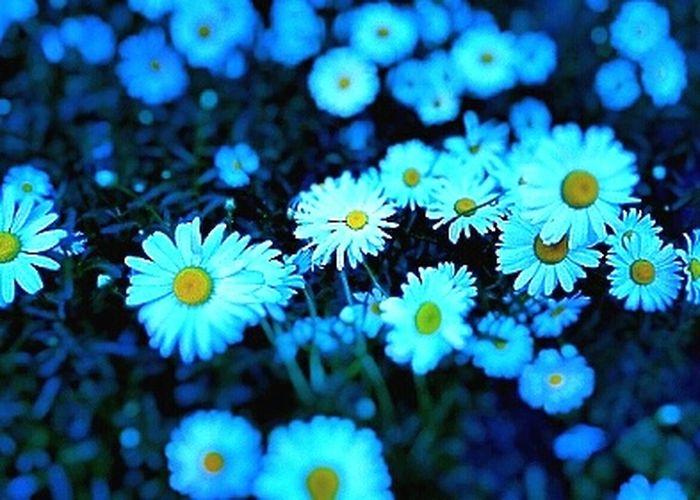 Shasta Daisy FlowerBeautiful View Flowerporn Flowers Take Photos Flower And Garden Wildflowers Freshness Springtime