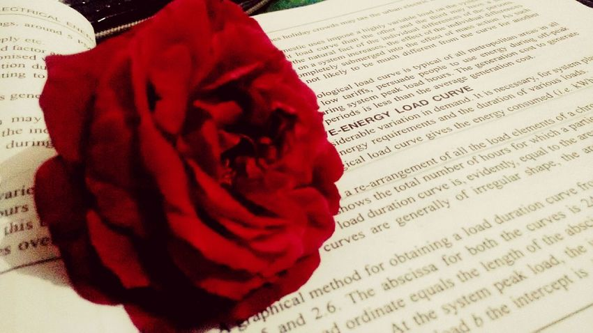 Rosified 🌹 Roses No People Petal Close-up Love To Take Photos ❤ Indoor Photography Rose♥ Love Them ❤ Flawless❤ Photographylove❤ Peace And Quiet Purist In Photography Studies Old Click Captallery📷 Memos