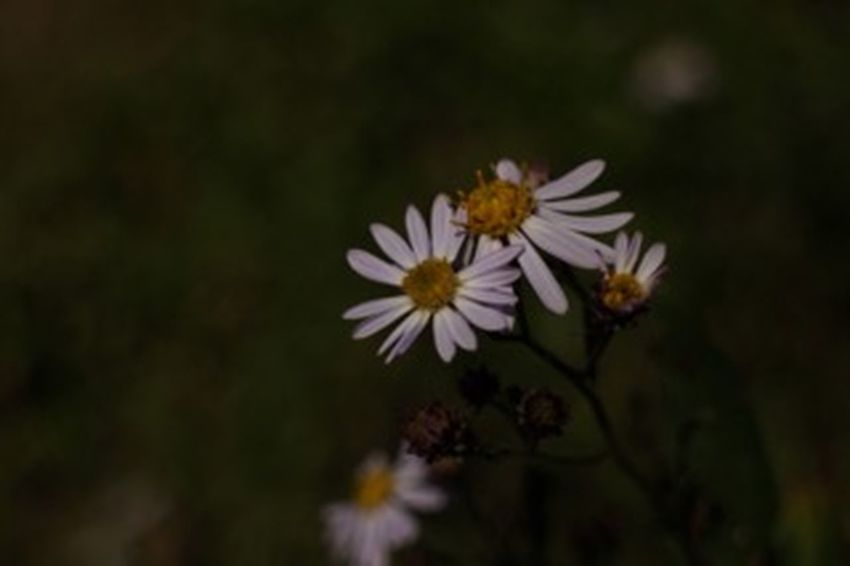 Flower 花 なんてはな?小さく美しく。 お疲れ様 でした(*'͜' )⋆*