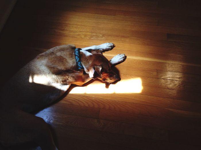 Find the light. Dog Sleeping Sunlight Open Edit EyeEm Animal Lover