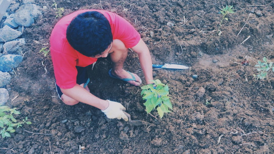 High Angle View Of Man Planting On Farm