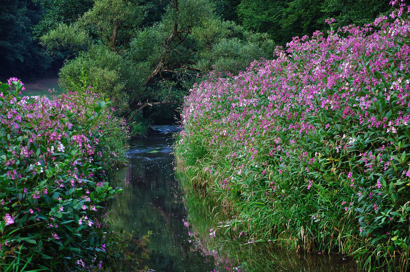 Pink flowering plants and trees in forest
