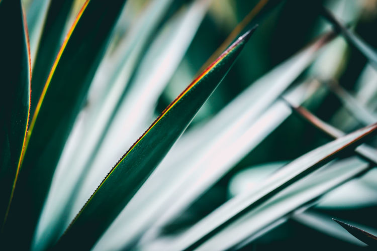Smooth or Spikey? Beauty In Nature Blade Of Grass Botany Cactus Close-up Day Focus On Foreground Fragility Freshness Full Frame Green Green Color Growing Growth Nature No People Plant Selective Focus Tranquility