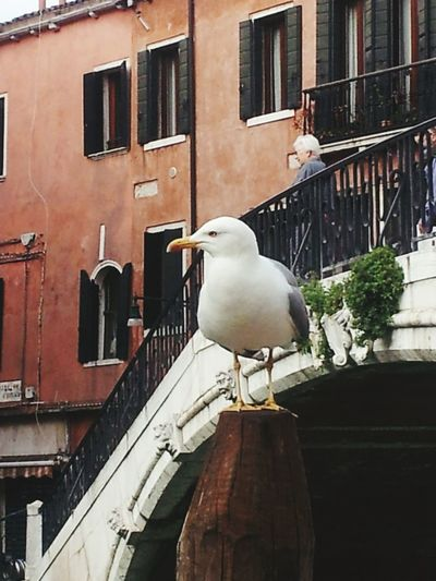 One Animal One Person Day Lifestyles Outdoors , Venezia ,2016