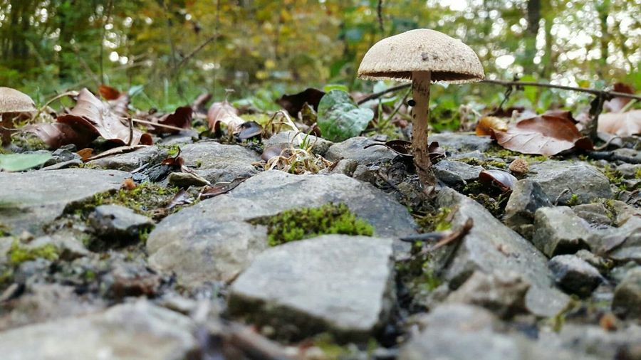 Nature No People Outdoors Day Beauty In Nature Shroom Mushrooms Mushrooms 🍄🍄 Mushroomphotography Mushrooms Gallery