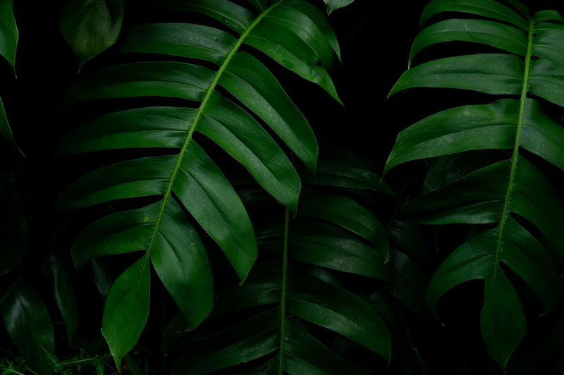 Backgrounds Beauty In Nature Close-up Day Freshness Full Frame Green Color Growth Leaf Leaf Vein Leaves Natural Pattern Nature No People Outdoors Pattern Plant Plant Part Tranquility