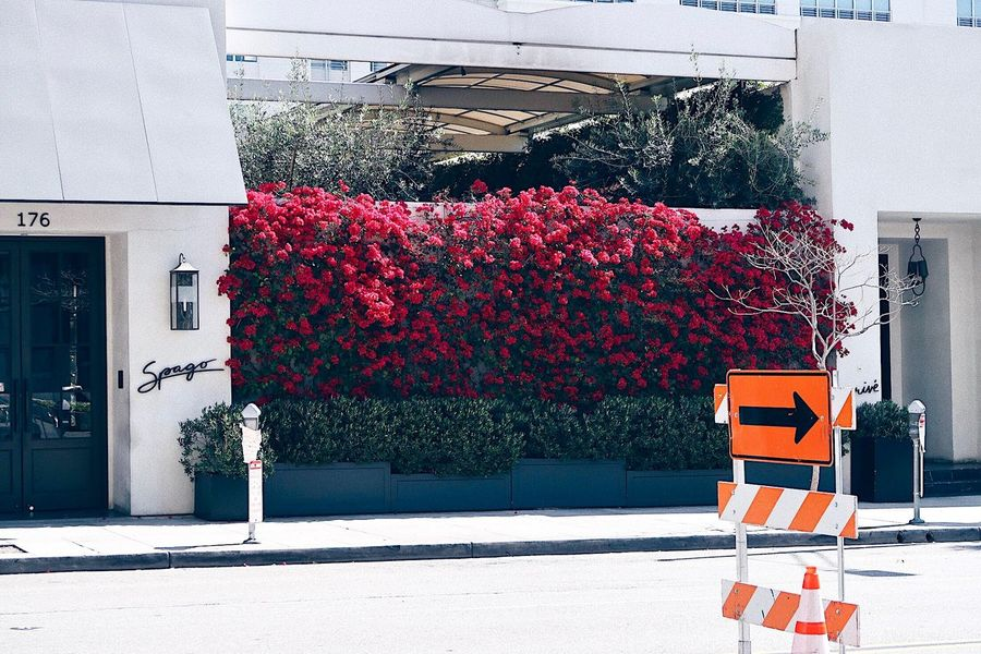 Blooming Flowers Blossom Urban Landscape Urban Street Architecture Building Exterior Built Structure Day No People City Sunlight Outdoors Nature Road Building Sign