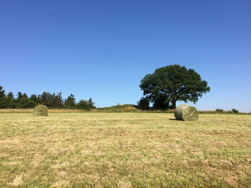 Outdoors Tree Clear Sky Nature Agriculture Grass Field Day Hay