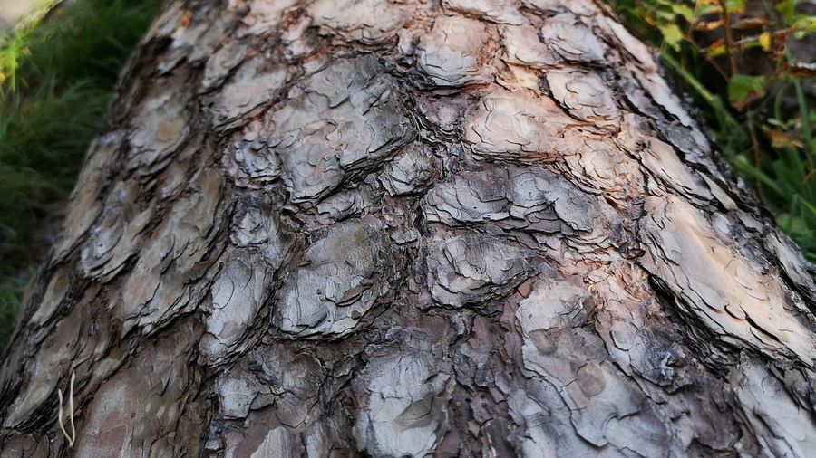 Backgrounds Bark Beauty In Nature Close-up Day Focus On Foreground Full Frame Growth Natural Condition Natural Pattern Nature No People Outdoors Pattern Plant Plant Bark Rough Textured  Tree Tree Trunk Trunk Wood - Material