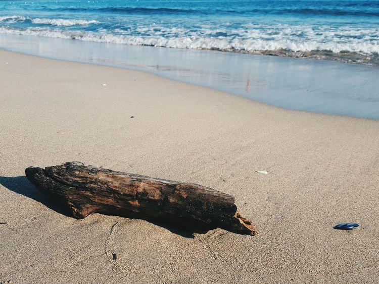 Showcase: January Beach Log Forlorn