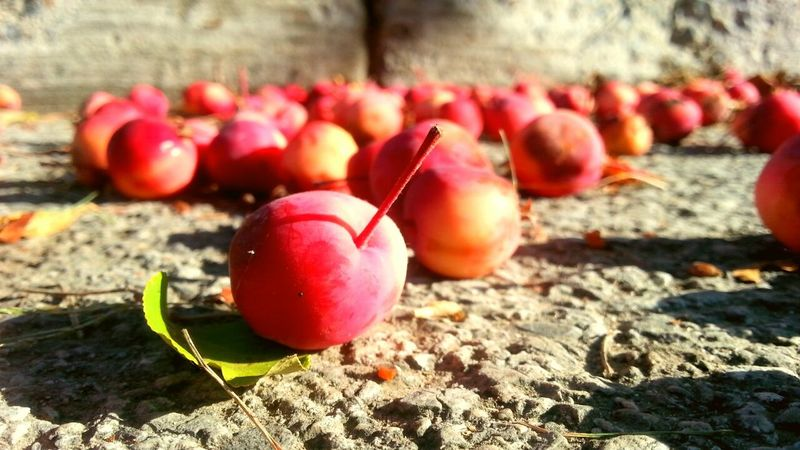 How do you like them apples?? Crab Apple Tree Street Photography Concrete Redish :) Red Shadow