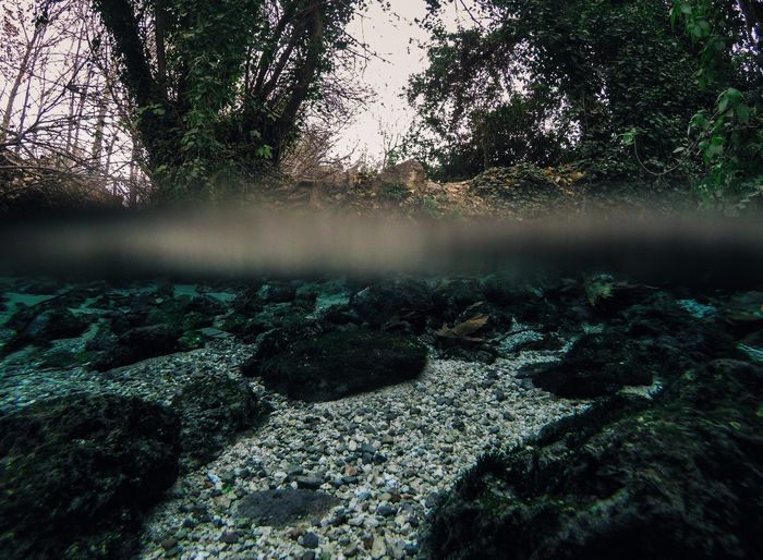 Half underwater EyeEm Ready   EyeEmNewHere Landscape Scenics Water Forest Tranquil Scene No People Tranquility Outdoors Day Tree Beauty In Nature Nature Underwater A New Perspective On Life