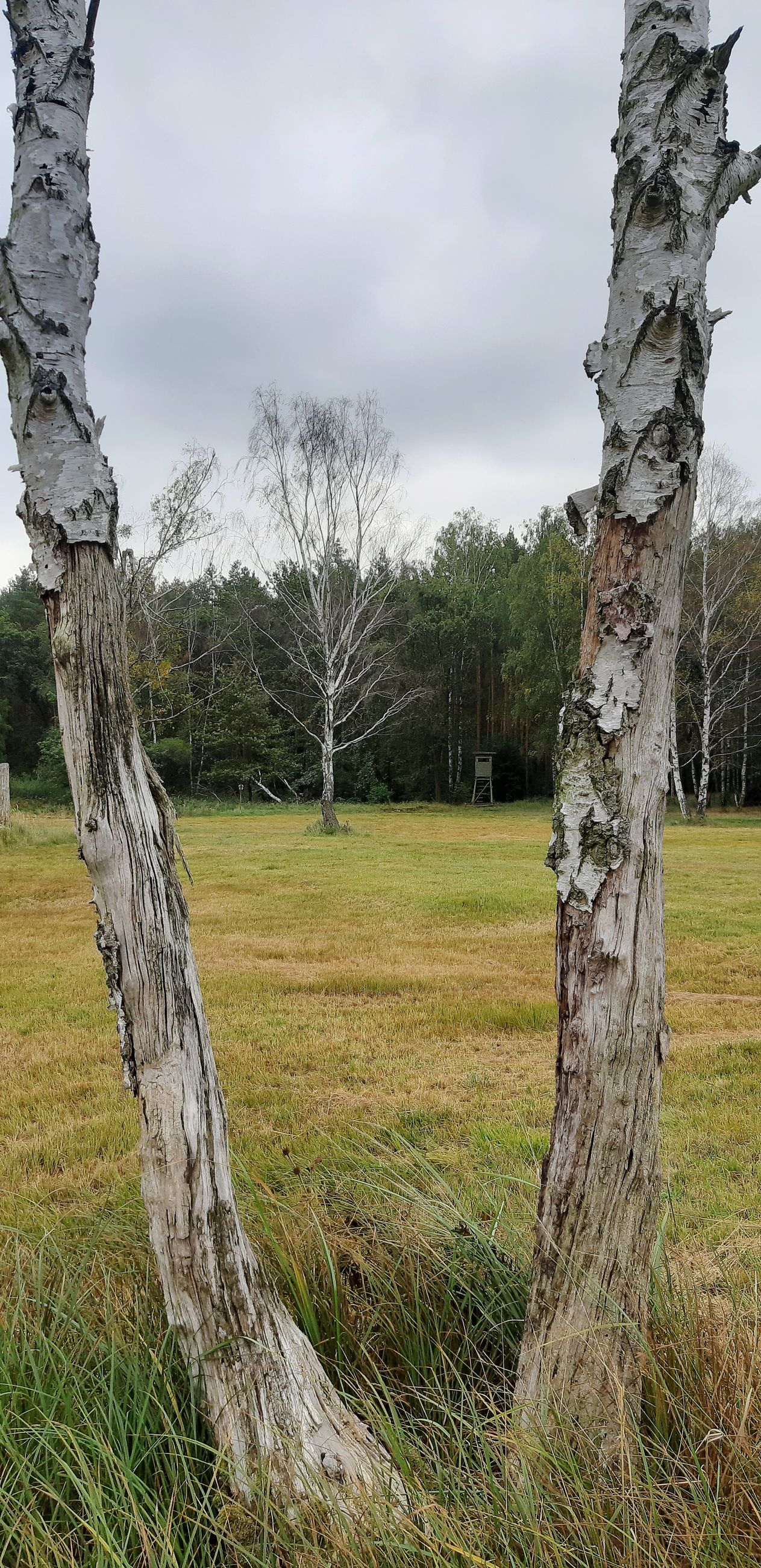 tree, plant, land, sky, field, cloud - sky, grass, landscape, tree trunk, trunk, nature, day, environment, no people, tranquility, growth, tranquil scene, scenics - nature, wood - material, beauty in nature, outdoors, dead plant, bark