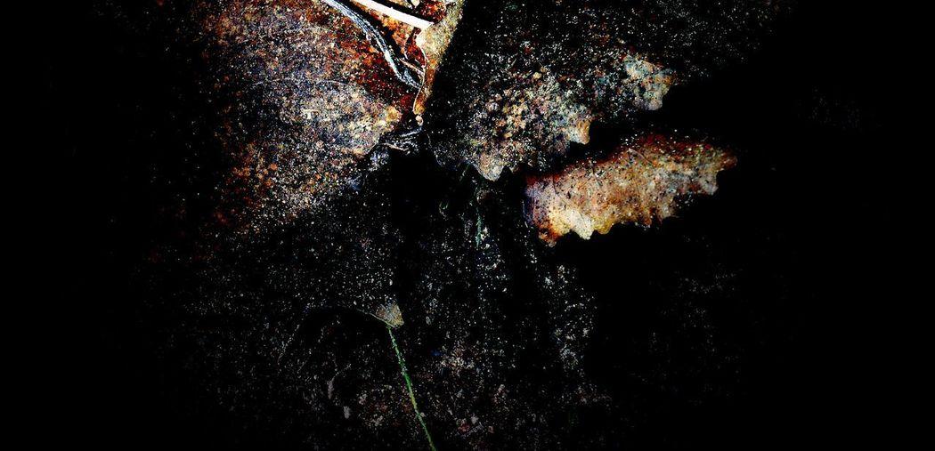 No People Close-up Nature Water Beauty In Nature Sea Studio Shot Indoors  Underwater Animals In The Wild Textured  Black Background Day Animal Sea Life Decline UnderSea Deterioration Marine