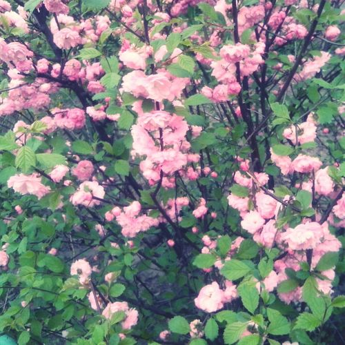 First Eyeem Photo Flowers Spring