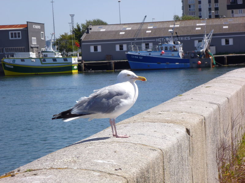 Bird City Fisherman Boat Jetty Outdoors Port Sea Bird Seabird Seagull Animal