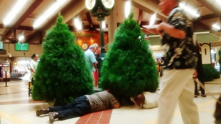 Putting up Christmas trees,airport on Maui! Hanging Out Loving Life! Picturing Individuality What Does Peace Look Like To You? Applied Quantum Physics