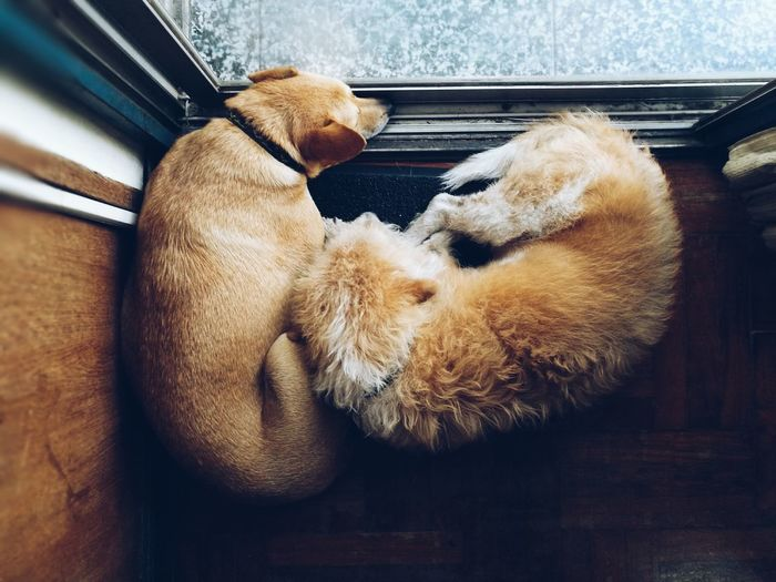 Top View Of Two Of Dogs