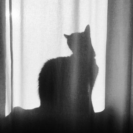 Good Morning Cat Eyemcat Enjoying The Sun