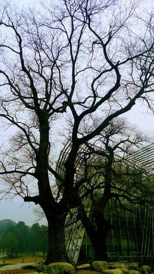 Beijing memory Tree Branch Sky Bare Tree Tree Trunk Growing Countryside