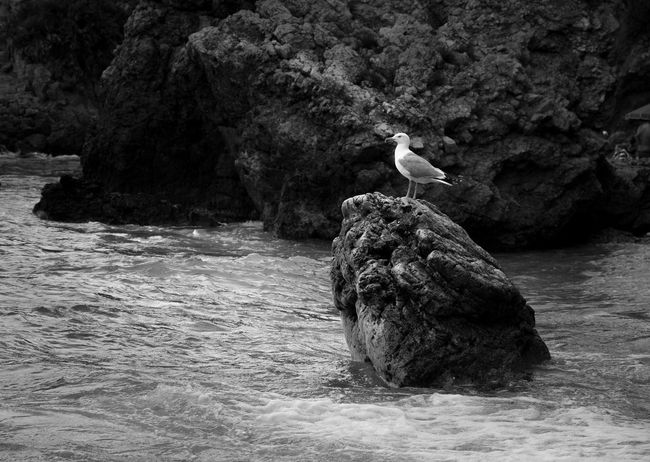 Bird Animal Wildlife Animals In The Wild Nature Animal Themes One Animal Water Bird Of Prey Outdoors Nature Sicily Sea And Animal Relax Moment Timeless Travel Our Planet Photo Of The Day Riserva Naturale Dello Zingaro Blackandwhite Monochrome EyeEmNewHere Let's Go. Together. Sommergefühle EyeEm Selects Breathing Space