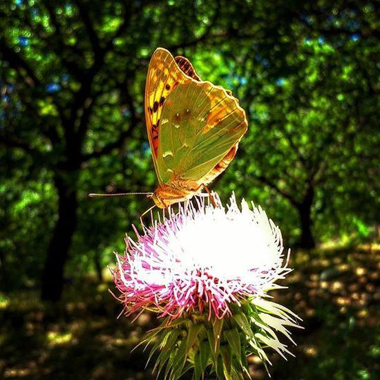 Koyde bahçe sularken. Shutterclub Shutterbug_collective Shutup Shuffle c flying flyinghigh