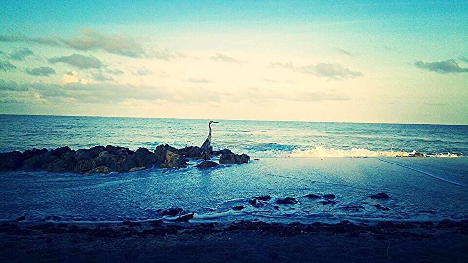 Nature_collection Ocean Putabirdonit Birds_collection Hometown
