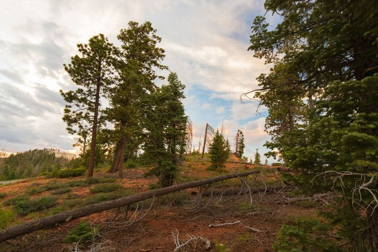 great mood of light at Bryce Canyon Plant Tree Sky Cloud - Sky Land Nature Landscape Forest No People Environment Scenics - Nature Growth Day Tranquility Non-urban Scene Tranquil Scene Beauty In Nature Outdoors Field Travel Pine Tree Coniferous Tree Sunset Bryce Canyon