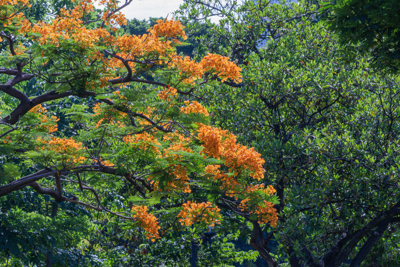 Low angle view of flowering plants against trees during autumn