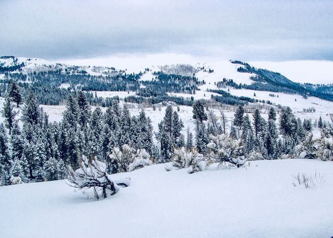 Lamar Valley Landscape EyeEm Selects Winter Cold Temperature Snow Beauty In Nature Nature Sky Scenics - Nature Tree Environment No People Day Land Frozen Cloud - Sky Plant Tranquility Tranquil Scene Outdoors Non-urban Scene Coniferous Tree