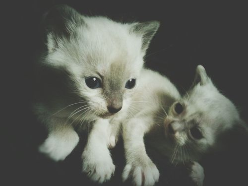 Beutiful  Amazing_captures Little Cat, Big World Little Pet Pet Portrait Pets Corner Cats Of EyeEm Cat So Cute Cute Cats Cute Pets Taking Photos