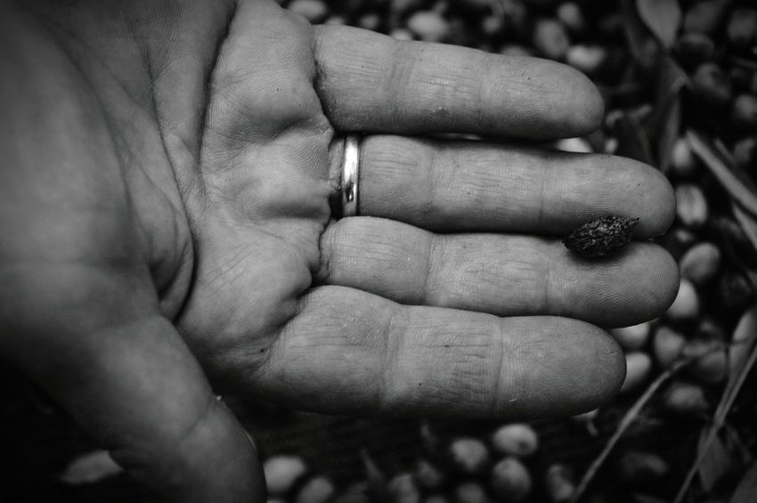 The soil is not always promising. This hand that is holding a dead olive has to feed a family. 🍃 Human Body Part Human Hand Focus On Foreground Close-up Adult Nature Soil Olive Olive Branch Blackandwhite Black And White Marriage  Ring Agriculture Emotional Palm Dramatic Dramatic Lighting Dramatic Black And White BYOPaper! The Photojournalist - 2017 EyeEm Awards EyeEm Selects
