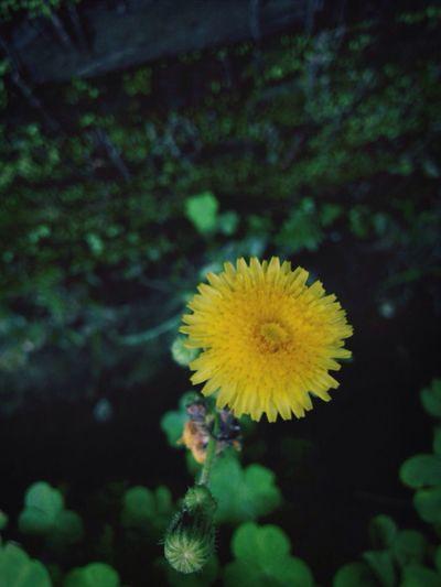 Nature Flower 拈花惹草