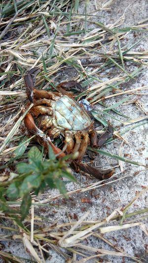 Nature Life Kepiting Holy Crab EyeEm Indonesia Beach